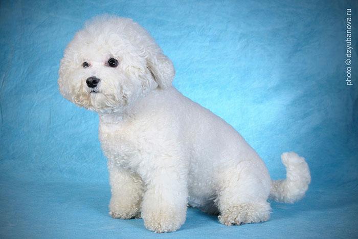 Еще одна редкая порода собак