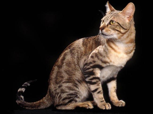 Выкройка мягкого домика для кошки своими руками