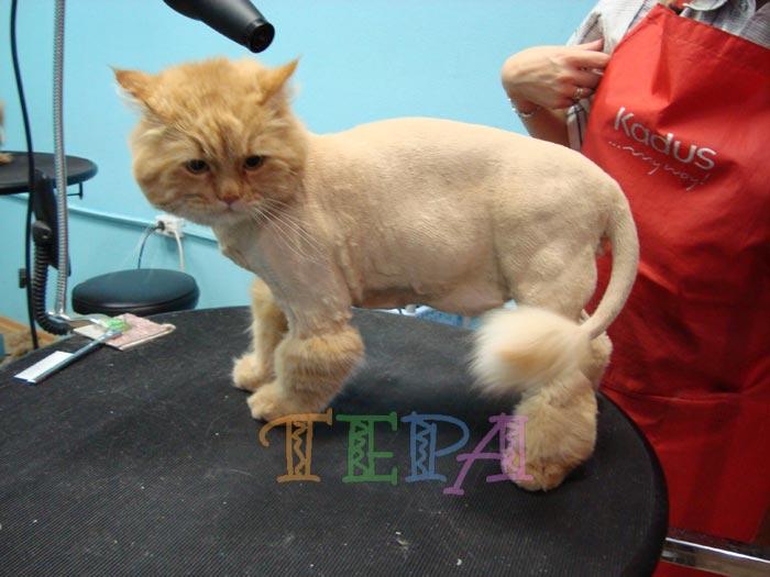 Как сделать стрижку коту