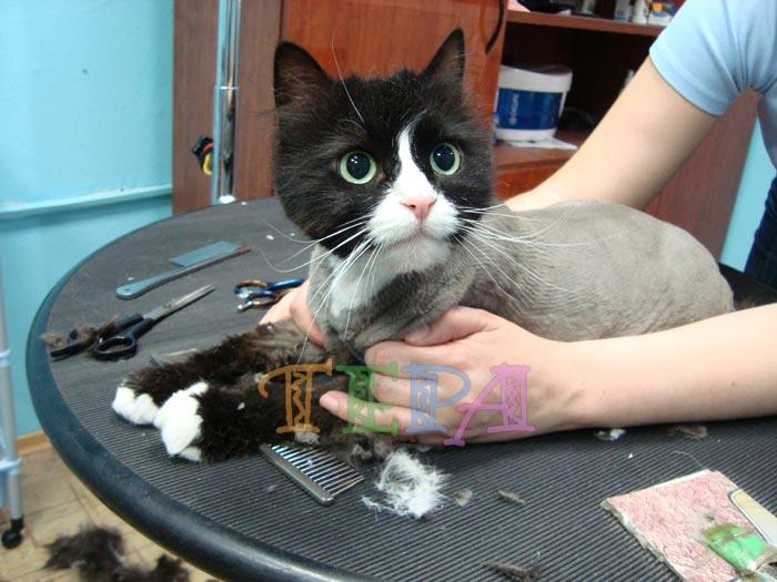 фото кошек стрижки