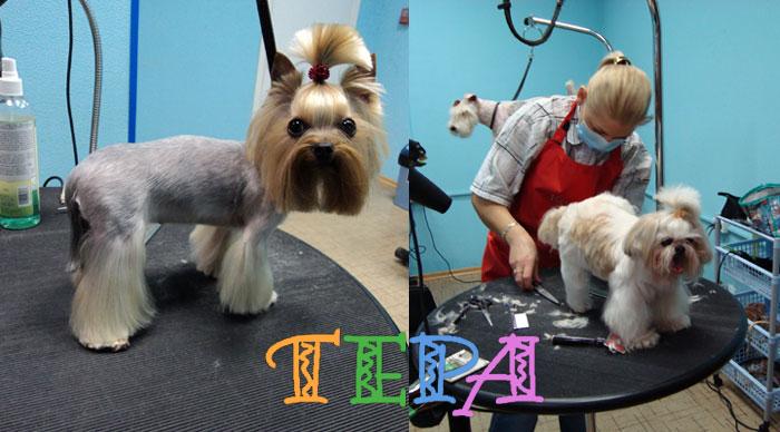 Фото стрижки собак