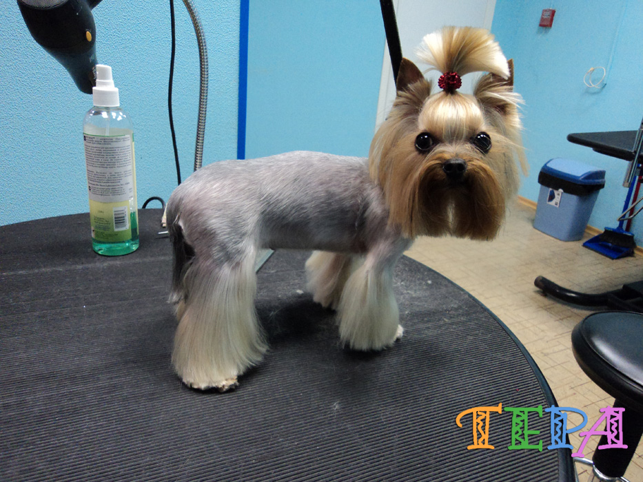 Фото стрижек собак: стрижки